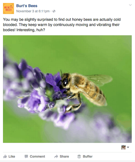 Burts Bees Facebook
